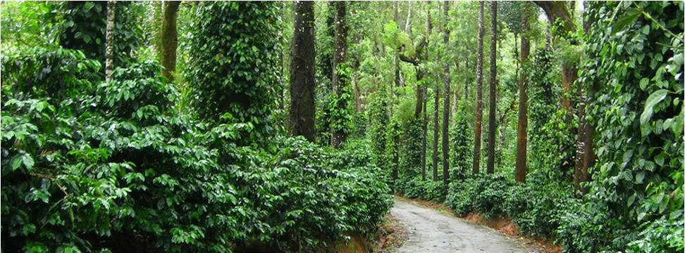 Coffee Plantation Road